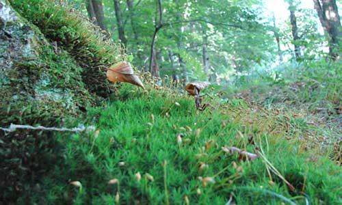 Ecotourism & Environment on Beaver Island