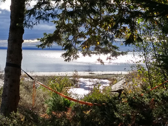 McSweeney's-view-from-cabin-of-creek-and-hammock550x412